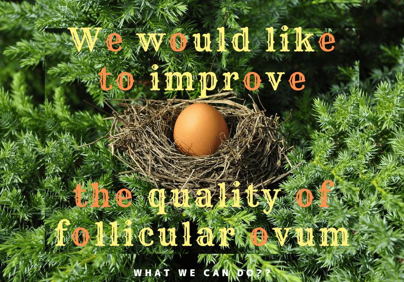 正常な卵胞の成長速度とは?卵胞を大きく理想的な数に育てる2つの方法