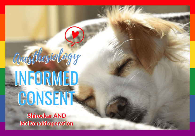 麻酔で寝ている犬の写真です。