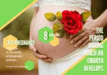 妊娠29w・30w・31w|写真で見る胎児と妊婦の様子【妊娠8ヶ月めレポ】